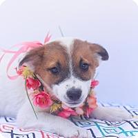 Adopt A Pet :: Gypsy - Loomis, CA
