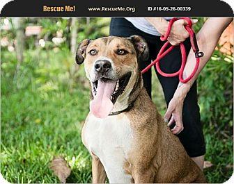 Shepherd (Unknown Type) Mix Dog for adoption in hollywood, Florida - Jake