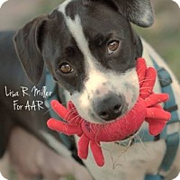 Adopt A Pet :: Pamela - Freeport, FL