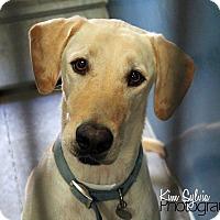 Adopt A Pet :: Anthem - Phoenix, AZ