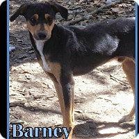 Manchester Terrier/Fox Terrier (Smooth) Mix Dog for adoption in Ringwood, New Jersey - Barney