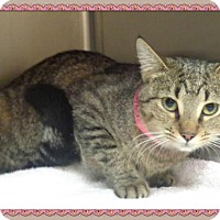 Domestic Shorthair Cat for adoption in Marietta, Georgia - LEXI