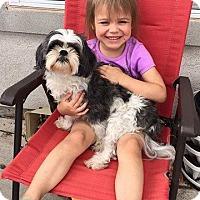 Adopt A Pet :: Baxter - El Paso, TX