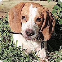 Adopt A Pet :: Elton - Houston, TX