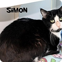 Adopt A Pet :: Simon - Edgewood, NM