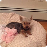 Adopt A Pet :: Mason - N. Babylon, NY
