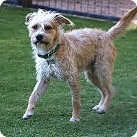 Adopt A Pet :: Harris - Allentown, PA