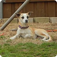 Adopt A Pet :: Tootsie - Aubrey, TX