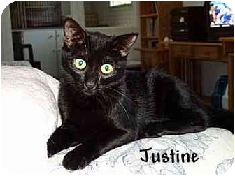 Domestic Shorthair Cat for adoption in AUSTIN, Texas - Justine