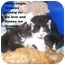 Photo 4 - Domestic Shorthair Kitten for adoption in Quincy, Massachusetts - Kittens!