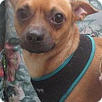 Adopt A Pet :: Rex (Julia's Foster) - Hudson, NY