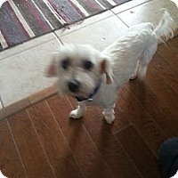 Adopt A Pet :: Miy - Northumberland, ON