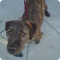Adopt A Pet :: Sally - Orange Cove, CA