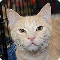 Adopt A Pet :: Louis - Harrisburg, NC