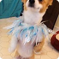 Adopt A Pet :: Rocco - Mooy, AL