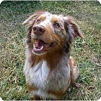 Adopt A Pet :: Hardy - Orlando, FL