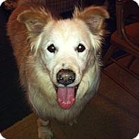 Adopt A Pet :: Mory - Salem, NH