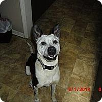 Adopt A Pet :: Sterling - Memphis, TN