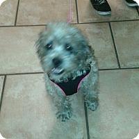 Adopt A Pet :: GONZO - Higley, AZ