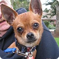 Adopt A Pet :: Chai (Ky) - Salem, OR