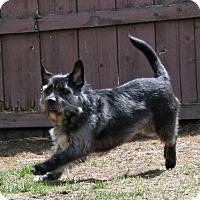 Adopt A Pet :: Buckshot - River Falls, WI