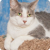 Adopt A Pet :: Tara - Elmwood Park, NJ