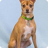Adopt A Pet :: Kanga - Atlanta, GA