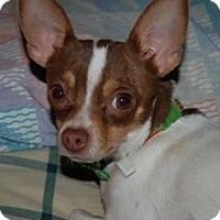 Adopt A Pet :: Canela  1 Year - C/S & Denver Metro, CO