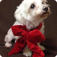 Adopt A Pet :: Piglet - Turlock, CA