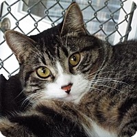 Adopt A Pet :: Luigi - Grants Pass, OR
