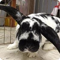 Adopt A Pet :: Lynn - Woburn, MA