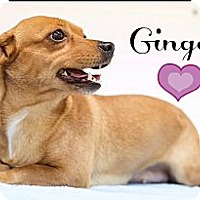 Adopt A Pet :: Ginger and Lilly (Reduced) - Washington, DC