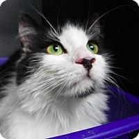 Adopt A Pet :: Toni - New York, NY