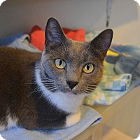 Adopt A Pet :: Diva - Broadway, NJ