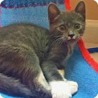 Adopt A Pet :: Linus - Duluth, GA