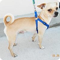 Adopt A Pet :: Stoney - Umatilla, FL
