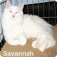 Adopt A Pet :: Savanah - San Ysidro, CA