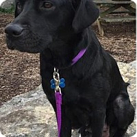 Adopt A Pet :: Enya Gray - Thompson's Station, TN