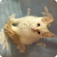 Adopt A Pet :: Wally - Fullerton, CA