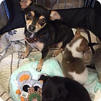 Adopt A Pet :: Carmela - Brea, CA