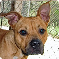Adopt A Pet :: Smash - Ruidoso, NM