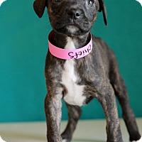 Adopt A Pet :: Chiefs - Waldorf, MD
