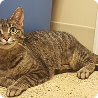 Adopt A Pet :: Mai Too - Circleville, OH