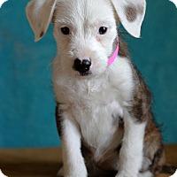 Adopt A Pet :: Erma ADOPTION PENDING - Waldorf, MD