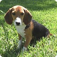 Adopt A Pet :: Mitzy - Tampa, FL