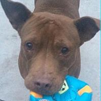 Adopt A Pet :: Ana - Albion, NY