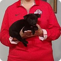 Adopt A Pet :: Cosmo - South Euclid, OH