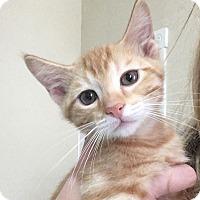 Adopt A Pet :: Baslow - St. Louis, MO