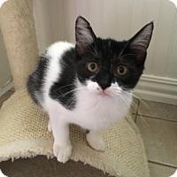 Adopt A Pet :: Pebbles 3 - Bulverde, TX