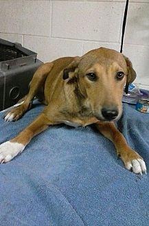 Cairn Terrier Mix Dog for adoption in Magnolia, Arkansas - 11/19/16 Litter #4